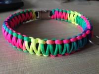 regenbogen halsband Suche Tester für Hundeleinen und -halsbänder in Haustiere