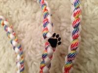 weiß - regenbogen leine Suche Tester für Hundeleinen und -halsbänder in Haustiere