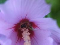 Biene in der Blüte So schön kann der Sommer sein in Small Talk
